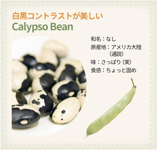 978_Beans_Calypso-Bean