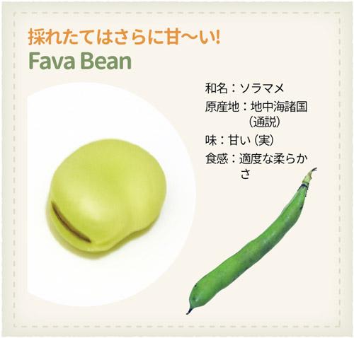 978_Beans_Fava-Bean