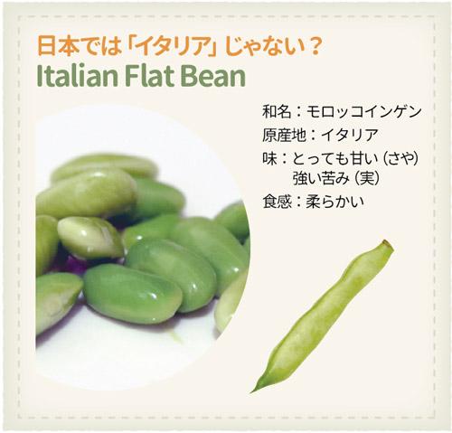 978_Beans_Italian-Flat-Bean