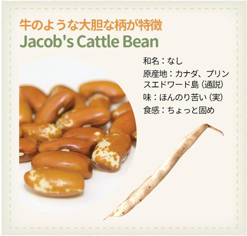 978_Beans_Jacobs-Cattle-Bean