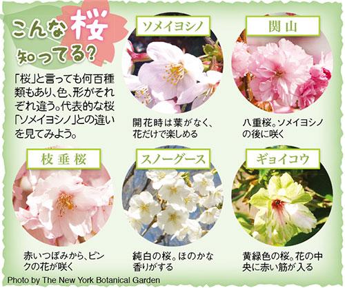 1013-Sakura_5-6