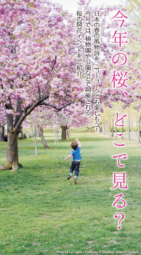 1013-Sakura_Tobira